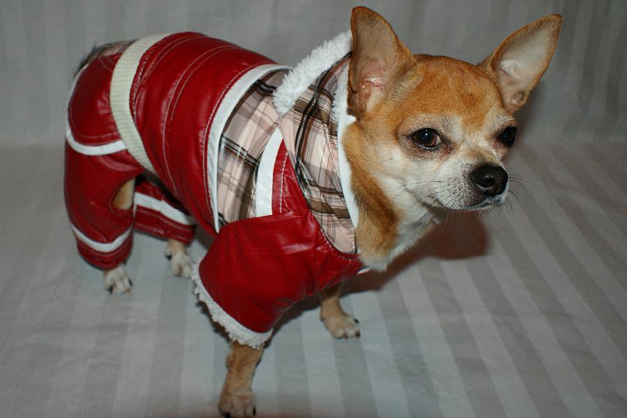 Zimowe trendy dla psa