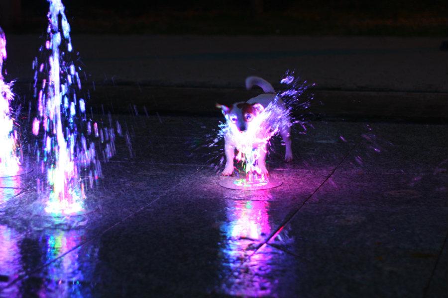 Udany debiut fontanny [VIDEO]