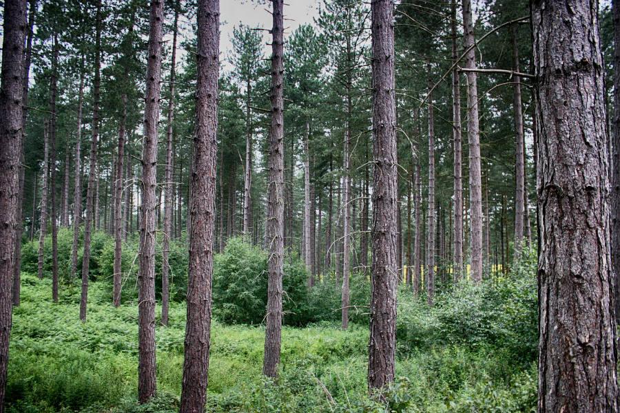 Od dziś zakaz wstępu do lasu!