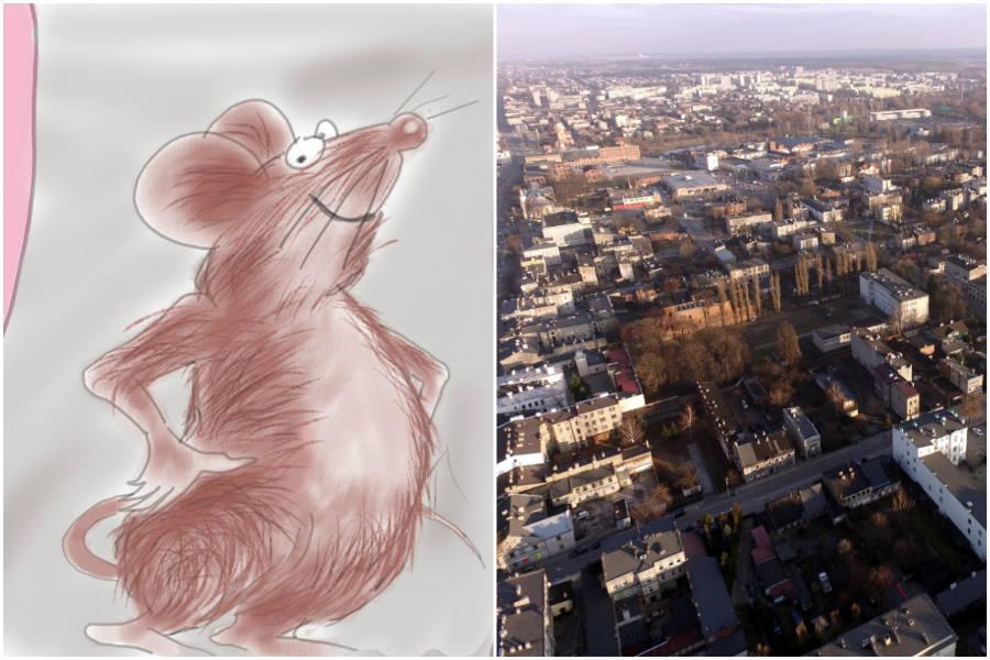Wypowiadamy wojnę szczurom