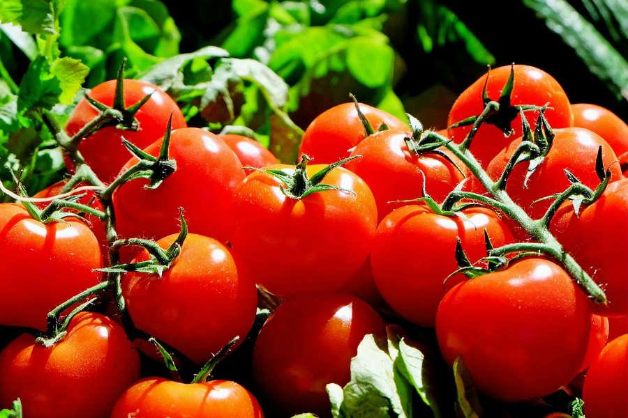 Lidl ostrzega przed plastikiem w pomidorach