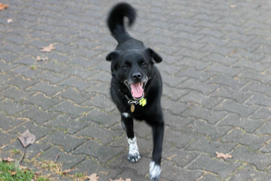 Jak zabezpieczyć psa i własną kieszeń po wprowadzeniu zaostrzonych przepisów