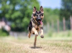 Straż Miejska przestała pobłażać lekkomyślnym właścicielom psów