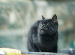 Policja: ranny kot doszedł do siebie i oddalił się w nieznanym kierunku