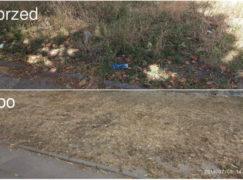 Prezydent nakazał uprzątnięcie trawnika w centrum miasta. Czy obywatel musi uderzać tak wysoko?