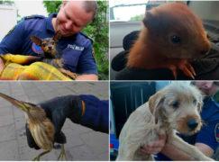 Strażnicy miejscy pomogą psom, jeżom i ptakom