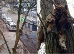 Koty na drzewach poruszają serca pabianiczan. Strażacy apelują o zdrowy rozsądek