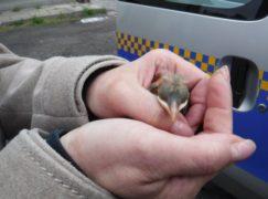 Pisklątko w rękach naszego Animal Patrolu