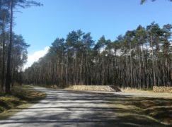 W lasach bardzo sucho. Bądźmy ostrożni!