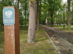 Botaniczne ciekawostki Pabianic: Aleja dębowa
