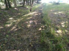 Trawnik wystrzyżony na irokeza. Nowy trend?