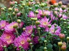 Jutro na pabianickich rynkach będzie można kupić kwiaty