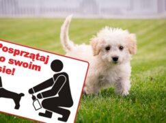 Wlepiają mandaty za psie kupy