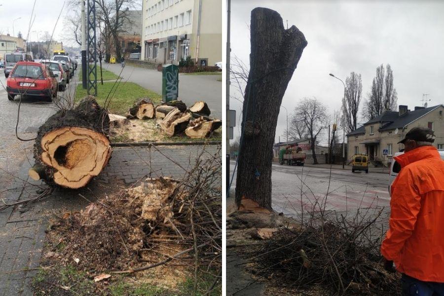 Wycinka drzew przy Zamkowej w Pabianicach