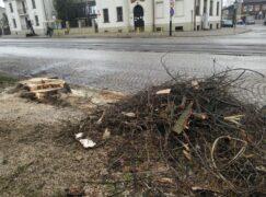 125 nowych drzew w mieście. Gdzie?