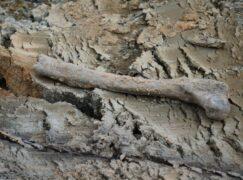 Ludzka kość leżała na ulicy. To nie powinno mieć miejsca